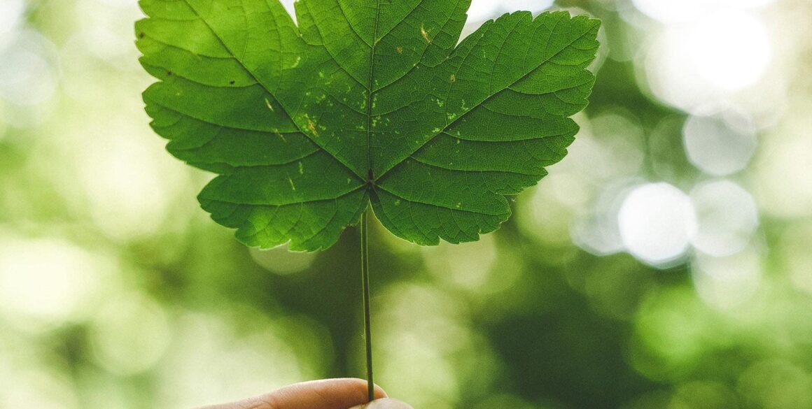 Miljövänligt löv